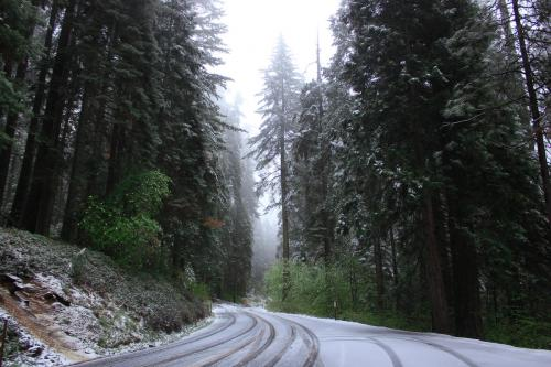 По снегам Калифорнии, США